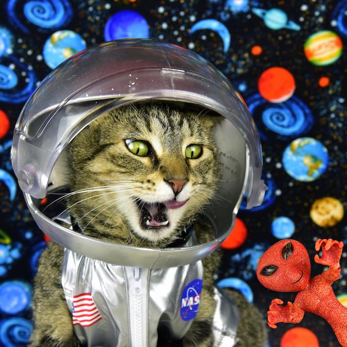 A Cat's Tale Astronaut