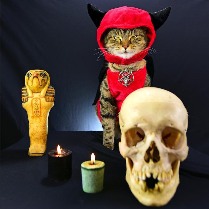A Cat's Tale Satan