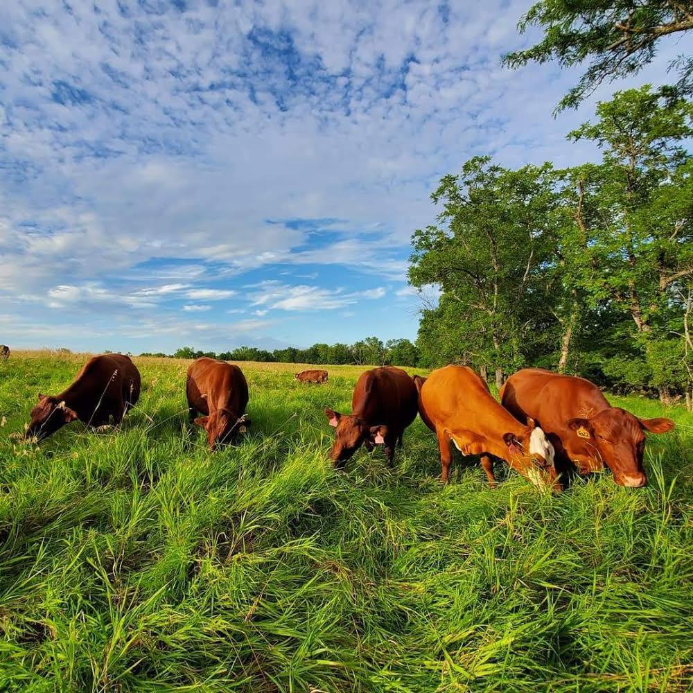 Five Mile Farms 2