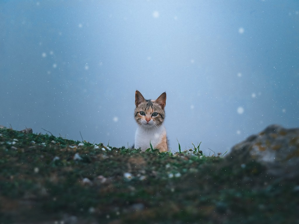With this frostwave, here are some tips on protecting your pets from the frigid temps
