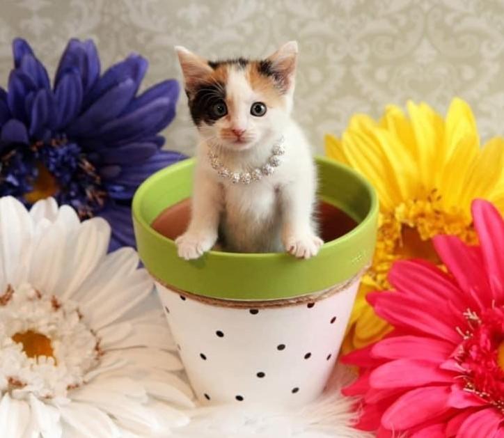 Kitten Jenny C