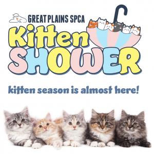 Kitten Shower Social
