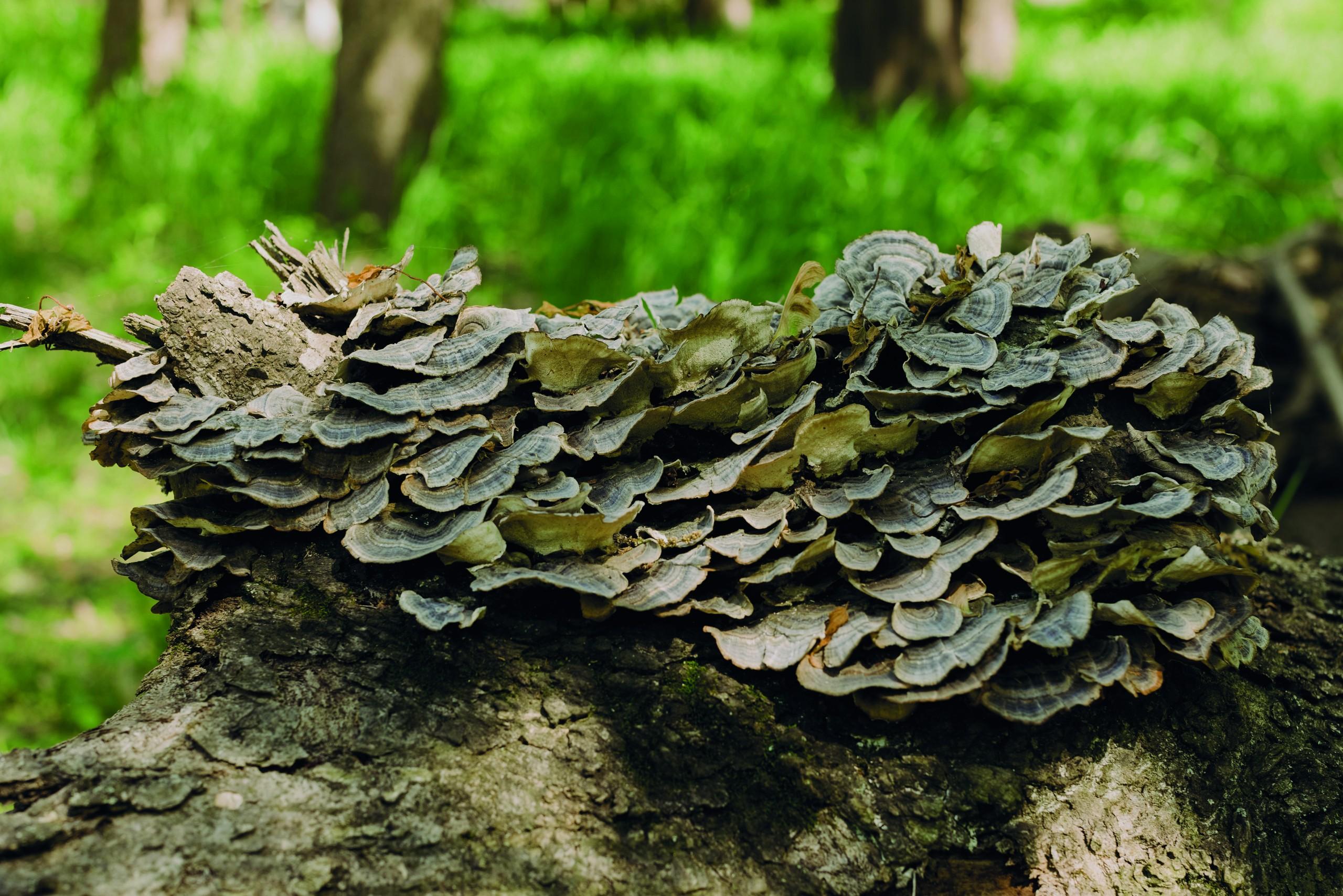 Magic (of) mushrooms