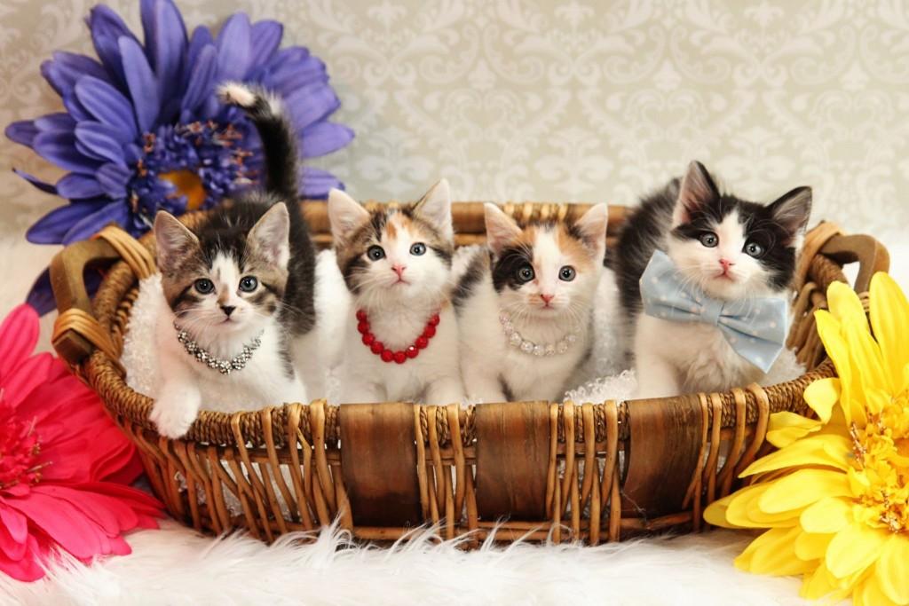 Kitten Jenny D 1