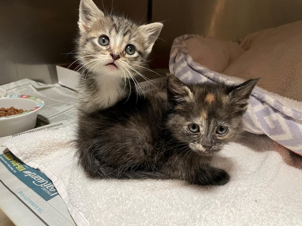 Kittens 6 Weeks
